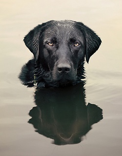 """ihavelotsofdogs: """" and he sits in the lake…. by Julie Hawkes on Flickr. """""""