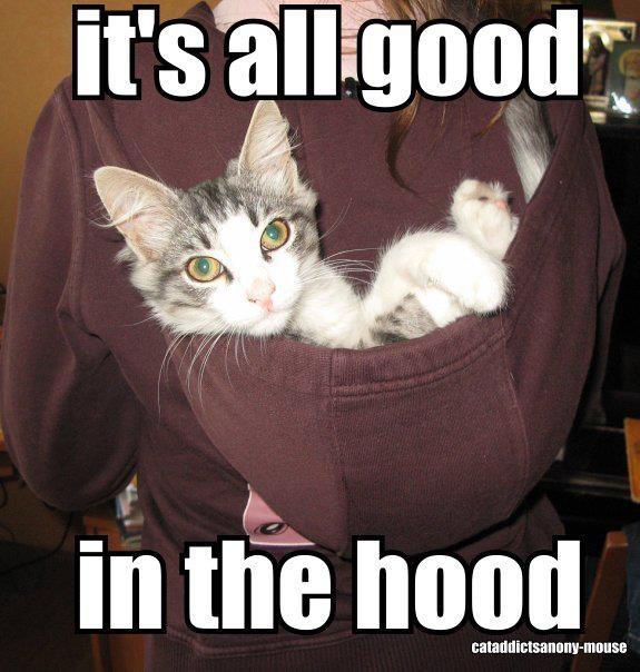 Cat in hood