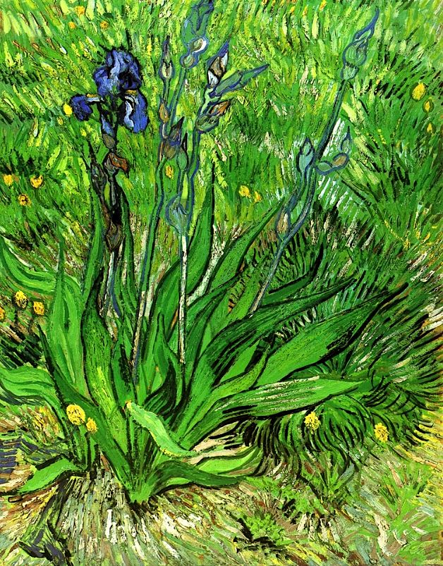 The Iris / Vincent van Gogh - 1889
