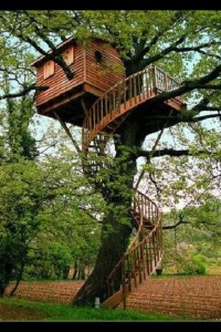 Spiral staircase treehouse | Ups and Downs. ~ | Pinterest