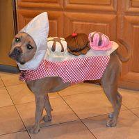 Banana Split Dog Halloween Costume | Dog Halloween ...