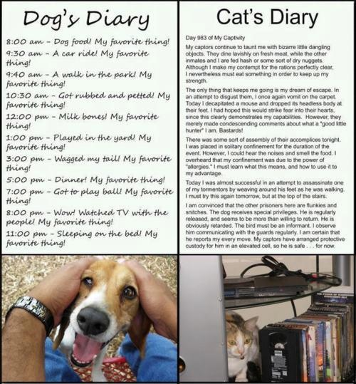 Dog and cat diaries. hehe LOL Pinterest