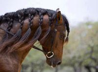 Braided Horse Hair
