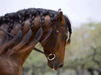 Braided Horse Hair | hair | Pinterest