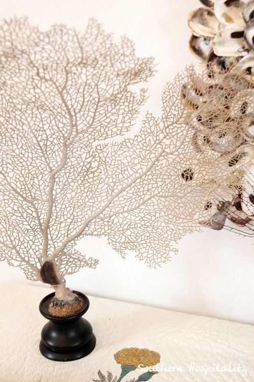 beautiful sea fans
