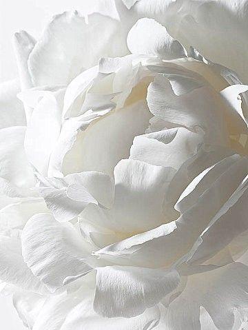 white..