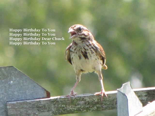 Happy Birthday Chuck By Momma B Via Flickr Cute