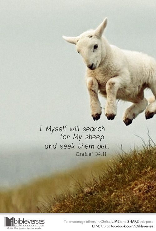 I Myself will search for My sheep and seek them out. —Ezekiel 34:11