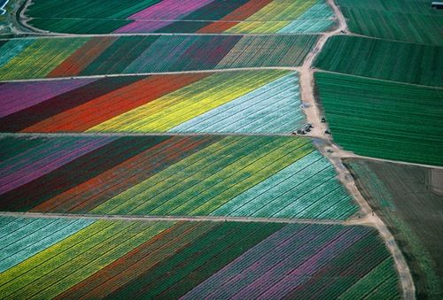 Aerial Photographs of the flower fields in Carlsbad CA.