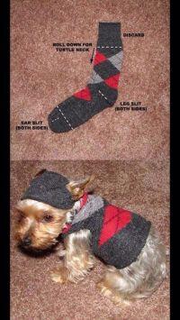 Cute Dog Sweater For Small Dog   Jasper   Pinterest
