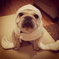 Baby Seal Costume for Dogs Standard Size by BlueBulli on ...