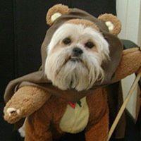 Ewok costume for dog