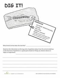 Fossils Worksheets