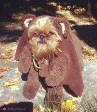 Walter as an Ewok