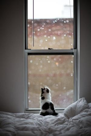 Watching it snow....
