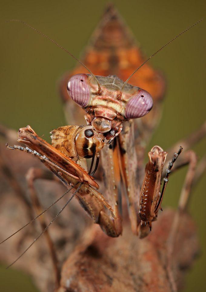 Insectos raros  Taringa  Insectes  Pinterest