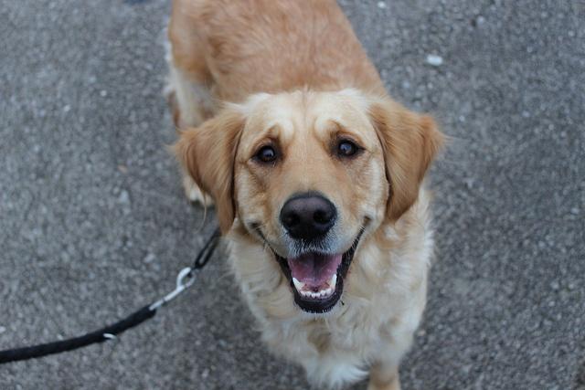 8 best family dog breeds Pups Pinterest