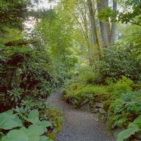 shade garden in the Pacific Northwest | Landscaping plans ...