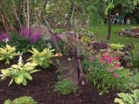 hostas in rock gardens   Landscape Ideas   Pinterest