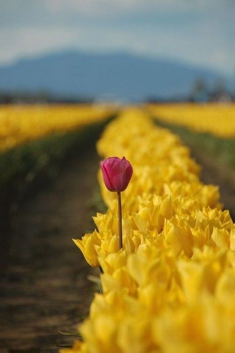"""Romans 12:2 """"Do not be conformed to this world..."""".  Dare to stand out, to be different.  :)"""