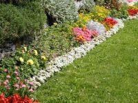 Pin by Lynne Smith on Gardening | Pinterest