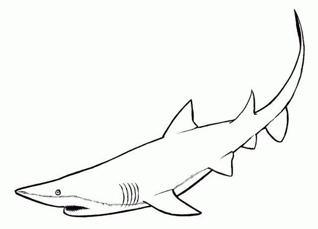 pintammy hemion on jaws & shark stuff  pinterest