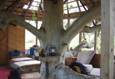 Cool Tree House Interior