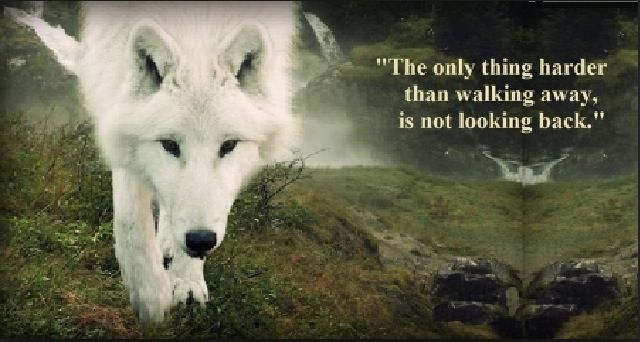 Quotes Inspirational Pack Wolf