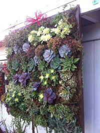 Succulent wall | Gardening | Pinterest