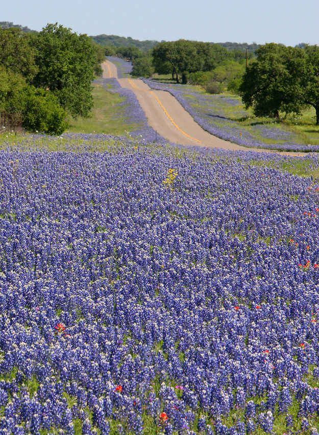 Because spring means bluebonnet-lined roads as far as the eye can see.