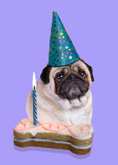 Pug Birthday Card Pugs Pinterest