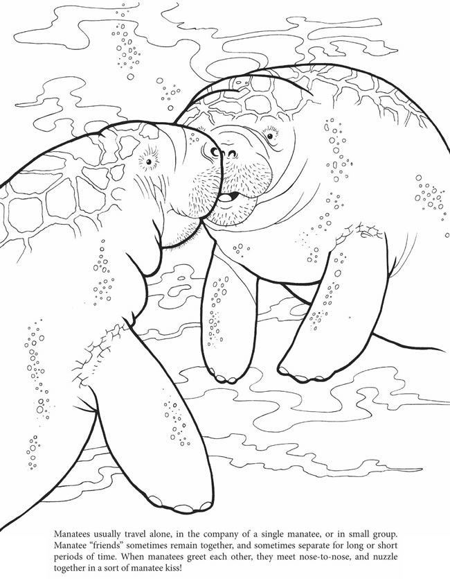 Manatee Coloring Page Sketch Coloring Page