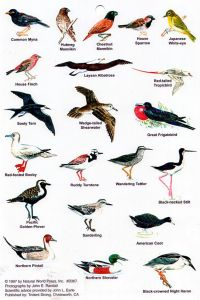 Hawaii Bird Guide Images - Reverse Search