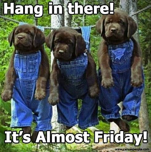 Hang In There It39s Almost Friday  Dog Funnies Pinterest