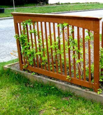 struttura fai da te per piante rampicanti