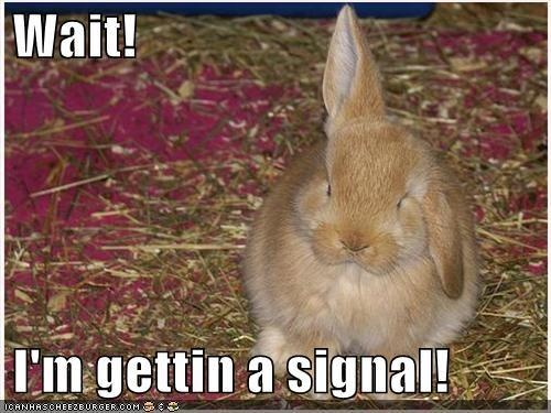 Silly Rabbit!