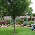 Front yard 1 my landscape ideas others pinterest