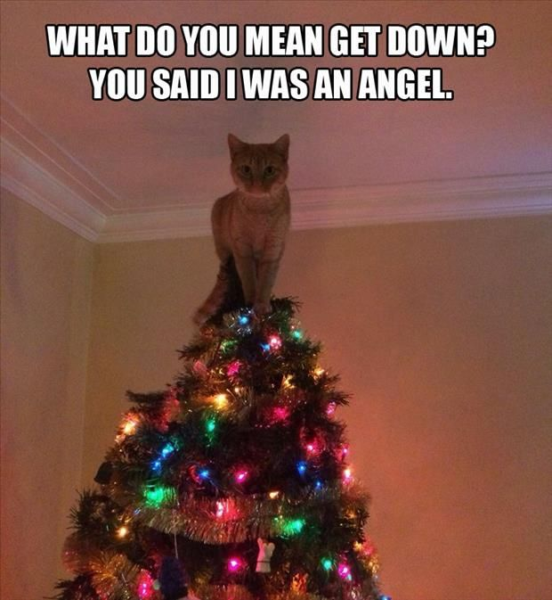 Funny Pictures Of The Day – 66 Pics