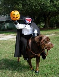 Headless Horseman dog costume | For The Dog | Pinterest