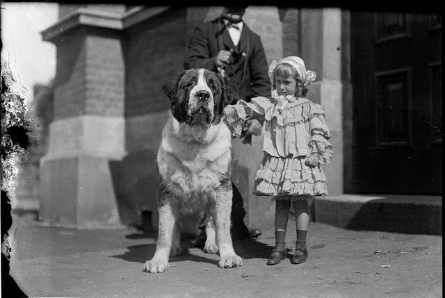 Girl and st. Bernard