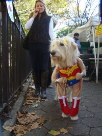 wonder woman dog costume | halloween | Pinterest