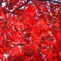 Autumn leaves in new england magnificent colors in nature pintere