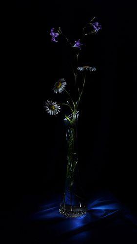 Wild flowers (lightpainting)