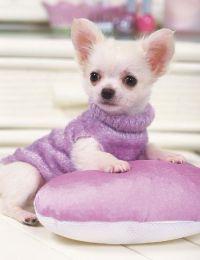 Chihuahua+Clothes