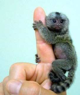 It is so small, but just so adorable and lovable!!! who wouldn't think that was adorable?