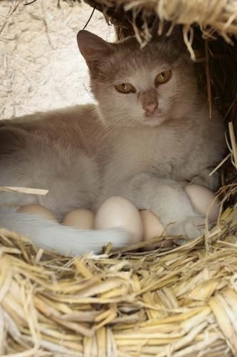 Waiting For The Eggs To Hatch