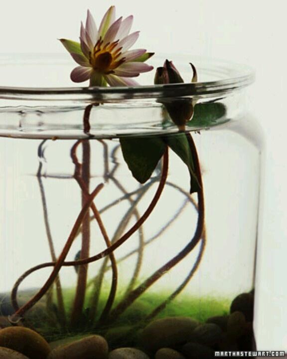 Indoor Water Flower Plants