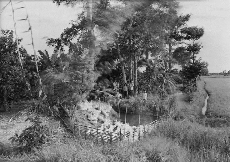 An-My Lê: Untitled, (Mekong Delta), 1994. From the Viet Nam Series. Image courtesy of the artist and Murray Guy, New York