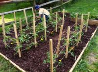 DIY tomato cages | garden | Pinterest