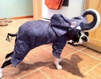 Elephant Costume | Dogs! | Pinterest